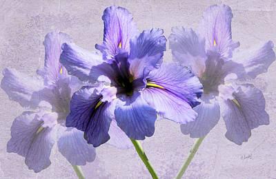 Purple Irises Art Print