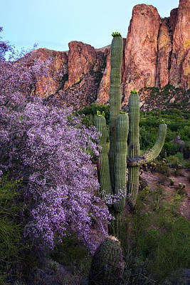Photograph - Purple Ironwood Blossoms And Goldfield Mountains by Dave Dilli