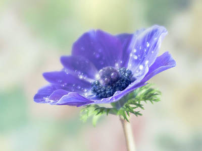 Photograph - Purple Is The Pantone Color For 2018. by Usha Peddamatham