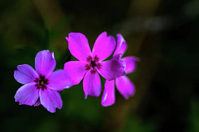 Photograph - Purple by Jay Stockhaus