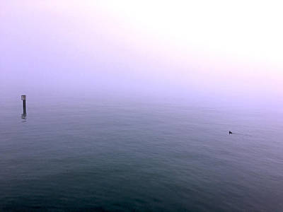 Photograph - Purple Lake Lost In Fog, A Photo Tribute To Prince On 4.21.16 by Barbara Budish