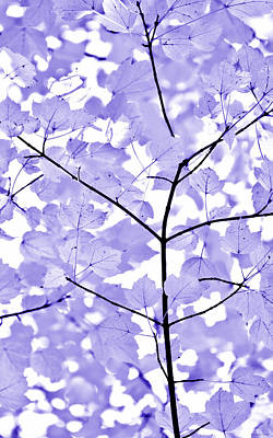 Photograph - Purple Lavender Leaves Melody by Jennie Marie Schell