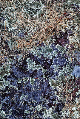Photograph - Purple Lichen by Paul W Faust - Impressions of Light