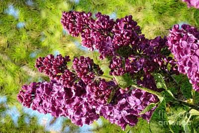 Photograph - Purple Lilac 1 by Jean Bernard Roussilhe