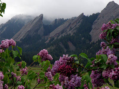 Photograph - Purple Lilacs Flatirons by George Tuffy