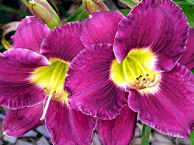 Photograph - Purple Lilies by Jean Hall