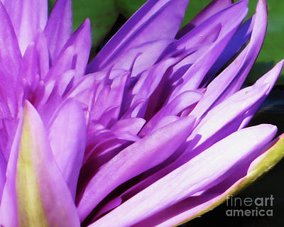 Photograph - Purple Lily by Dawn Gari