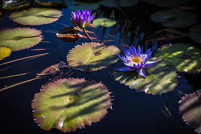 Photograph - Purple Lily by Jason Roberts