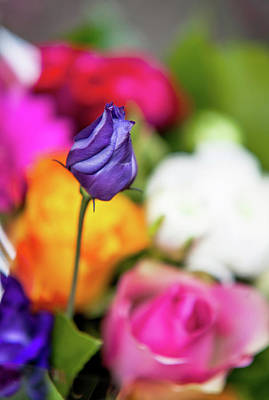 Photograph - Purple Lisianthus In Colorful Bunch by Jenny Rainbow