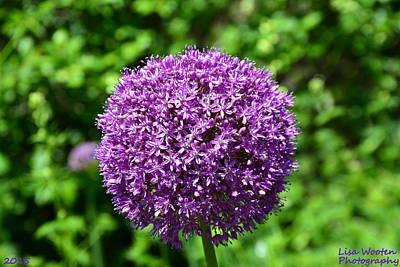 Photograph - Purple Lollipop  by Lisa Wooten