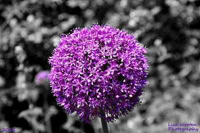 Photograph - Purple Lollipop Selective Coloring by Lisa Wooten