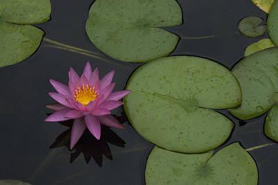 Art Print featuring the photograph Purple Lotus by Lisa Missenda