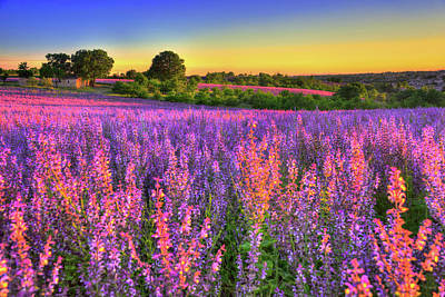 South Of France Photograph - Purple Love by Midori Chan