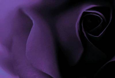 Photograph - Purple Love Passion by The Art Of Marilyn Ridoutt-Greene