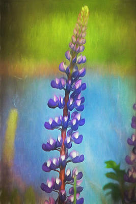 Photograph - Purple Lupine by Cindi Ressler
