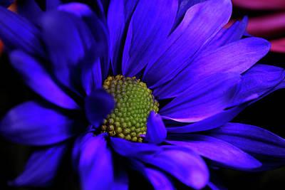 Photograph - Purple Magic by Judy Vincent