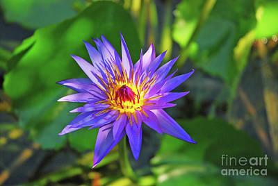 Photograph - Purple Magic by Robert Anschutz