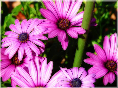 Photograph - Purple Magisty by Laura Brightwood