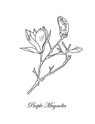 Drawing - Purple Magnolia. Botanical by Masha Batkova