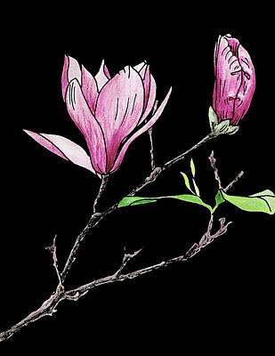 Mixed Media - Purple Magnolia. Colored by Masha Batkova