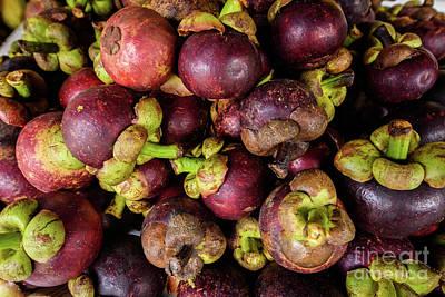 Photograph - Purple Majesty  by Sandy Molinaro