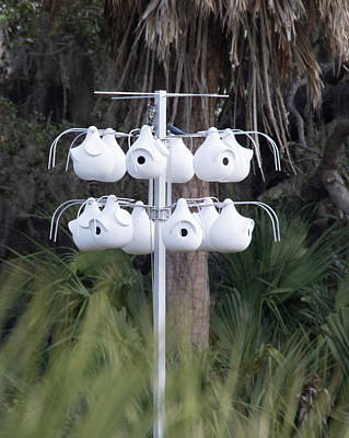 Photograph - Purple Martin Gourds by Richard Goldman