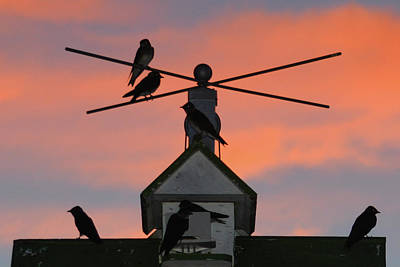 Photograph - Purple Martin Sunset by Tana Reiff