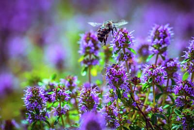 Photograph - Purple Meadow by Lilia D