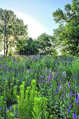Photograph - Purple Meadows by Bonfire Photography
