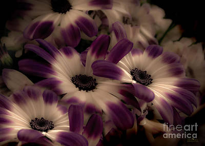 Photograph - Purple by Mehran Akhzari