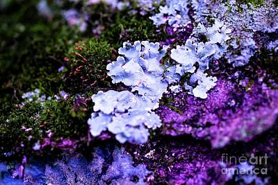 Photograph - Purple Moss by Crystal Harman
