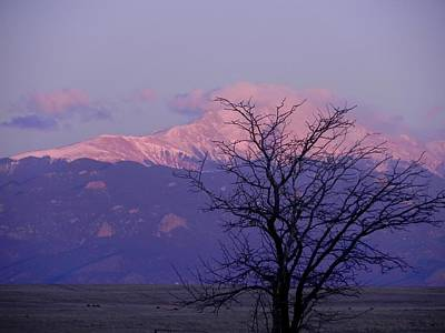 Wall Art - Photograph - Purple Mountain Majesty by Adrienne Petterson
