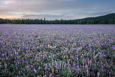 Photograph - Purple Mountain Meadow by Leland D Howard