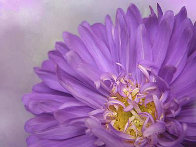 Photograph - Purple Mum by David and Carol Kelly