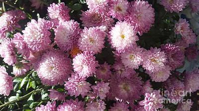Photograph - Purple Mum Flower by Michelle Jacobs-anderson