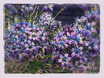 Photograph - Purple Mystery by Haleh Mahbod