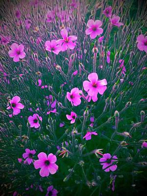 Photograph - Purple or Pink by Miki Klocke
