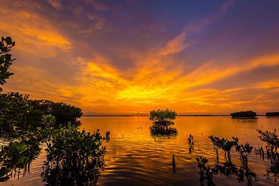 Classic Christmas Movies - Purple Orange Mangrove Delight by Ronald Kotinsky