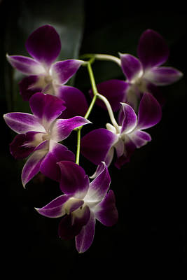 Purple Orchid  5 Original by Zina Stromberg