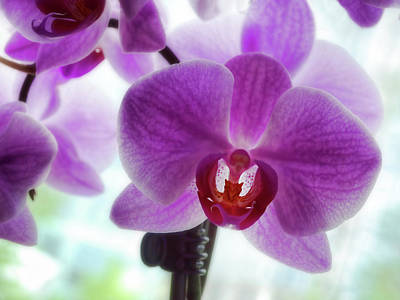 Photograph - Purple Orchid by Ann Powell