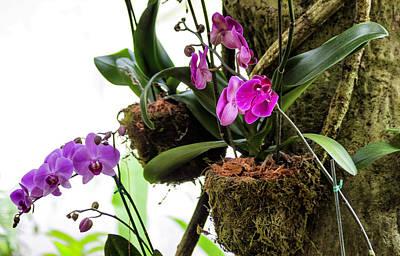Photograph - Purple Orchid by Bonnie Davidson