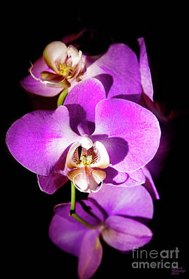 Orchid Photograph - Purple Orchid by David Millenheft