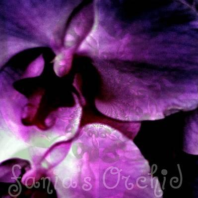 Observer Mixed Media - Purple Orchid by Fania Simon