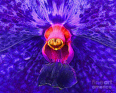 Photograph - Purple Orchid  Macro Study by Merton Allen