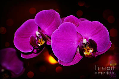 Photograph - Purple Orchid by Mindy Bench