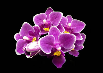 Photograph - Purple Orchid by Nathan Little