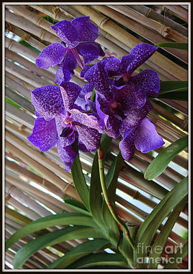Photograph - Purple Orchids On Bamboo Wall by Dora Sofia Caputo Photographic Art and Design