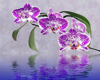 White Orchid Photograph - Purple Orchid Reflections by Gill Billington