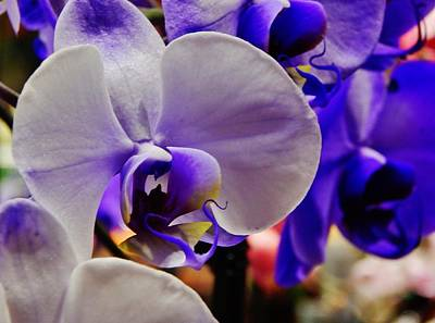 Photograph - Purple Orchid by VLee Watson