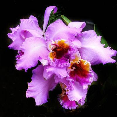Photograph - Purple Orchids by Anne Sands